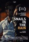 Snails in the Rain - 2013